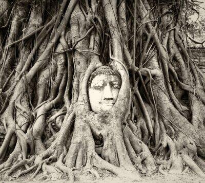 Fotomural Cabeza de Buda en raíces de árbol en Wat Mahathat, Ayutthaya, Tailandia