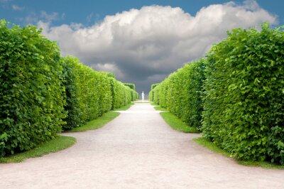 Fotomural callejón en el parque con árboles exactamente topiary