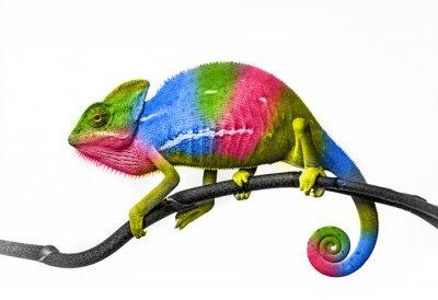 Fotomural Camaleón - colores