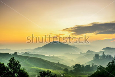 Fotomural Cameron Highlands ,Malaysia. Sunrise  at green tea farm mountain. Dramatic moving cloud in nature landscape on sunshine morning.