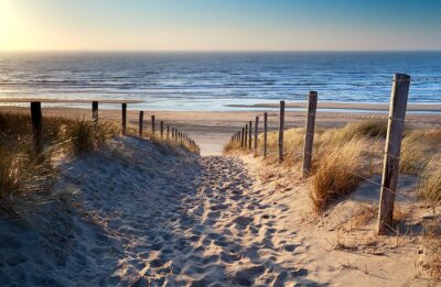 Fotomural camino a la playa del mar del Norte en sol de oro