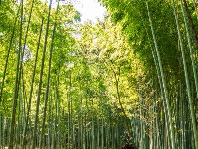 Fotomural Camino de bambú