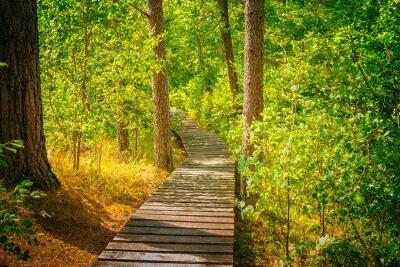 Fotomural Camino de madera en el bosque