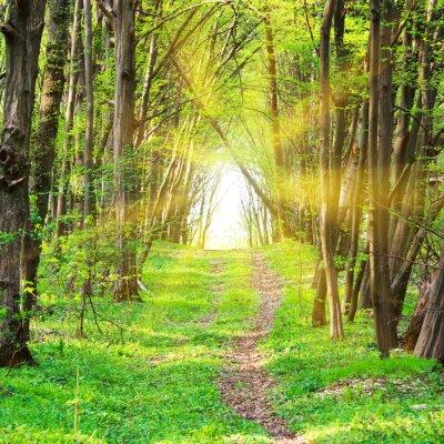 Fotomural Camino en el hermoso parque verde