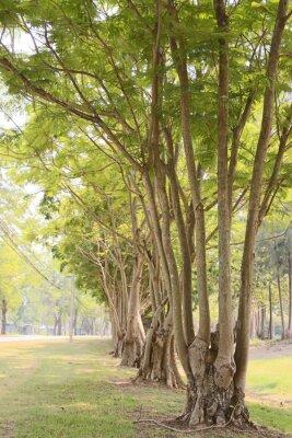 Fotomural Camino en el jardín