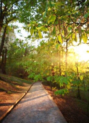 Fotomural Camino en el parque verde de la ciudad, encendió los rayos de la puesta del sol