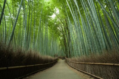 Fotomural Camino forestal de bambú, Kyoto, Japón