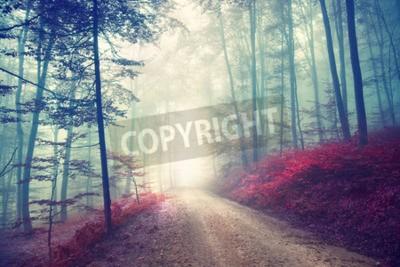 Fotomural Camino forestal del otoño del efecto del color de la vendimia con la luz de la fantasía. Se utiliza el efecto de filtro Vintage.