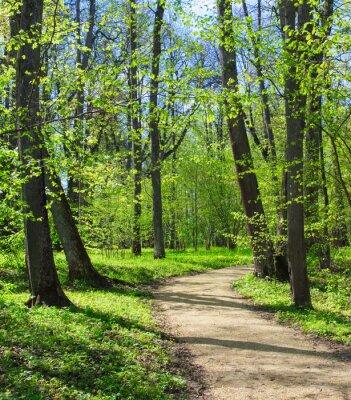 Fotomural Camino vacío en el parque de primavera