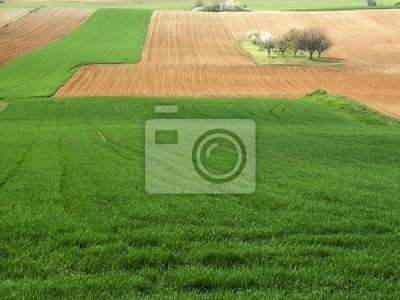 Fotomural campi