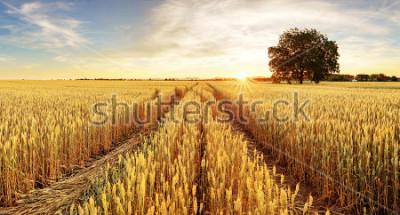 Fotomural Campo de arbol y trigo