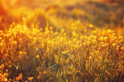 Fotomural Campo de flores de primavera