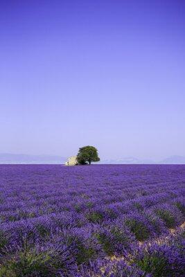 Fotomural Campos de floración flores de lavanda con antigua granja - Provence, Francia
