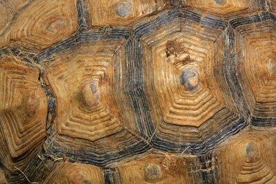 Fotomural caparazón de tortuga