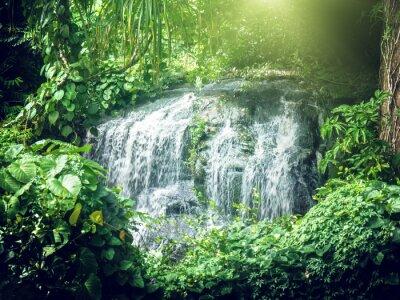 Fotomural cascada en selvas de Seychelles, isla de Mahe