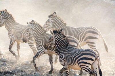 Fotomural Cebras, corriente, namibia, áfrica