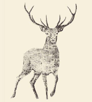 Fotomural Ciervo grabado, ejemplo del vintage, vector