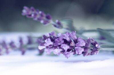 Fotomural Cloce de la flor de lavanda