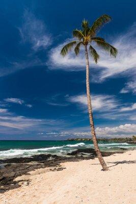 Fotomural Coco, palma, árbol, hawaiano, playa, grande, isla