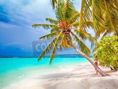 Fotomural Coconut palm beach