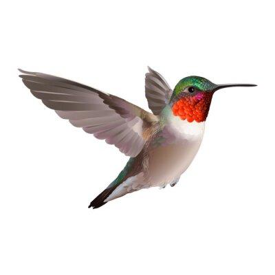 Fotomural Colibrí - Colubris archilocus. Mano ilustración vectorial dibujado sobre fondo blanco de un colibrí troathed-Ruby para volar con plumaje brillante colorido.