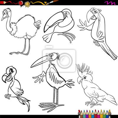 Colorear dibujos animados aves fotomural • fotomurales cacatúa ...