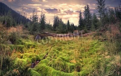 Fotomural Colorido amanecer de verano en el bosque mágico con una enorme alfombra de musgo verde