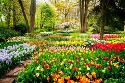Fotomural Coloridos tulipanes macizos de flores y camino en un jardín formal de primavera, retro tonos
