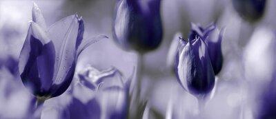 Fotomural Concepto de tulipanes tintados