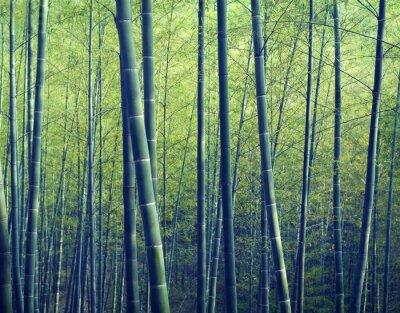 Fotomural Conceptos bosque de bambú árboles Naturaleza