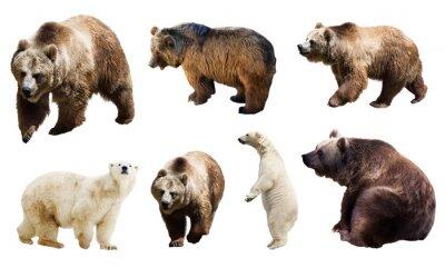Fotomural Conjunto de muchos osos. Aislado en blanco