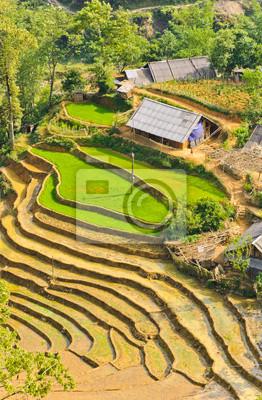 Cultivos En Terrazas De Arroz Vietnamita Fotomural