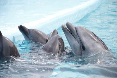 Fotomural Cute delfines durante un discurso en el delfinario