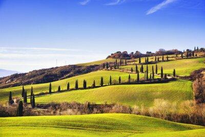 Fotomural Cypress árboles camino escénico. Siena, Toscana, Italia.