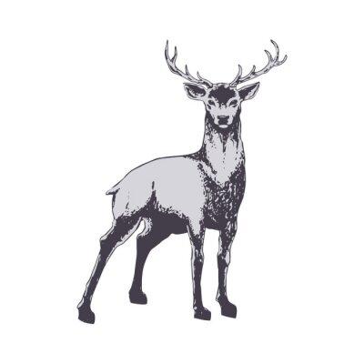 Fotomural Deer aislado en blanco