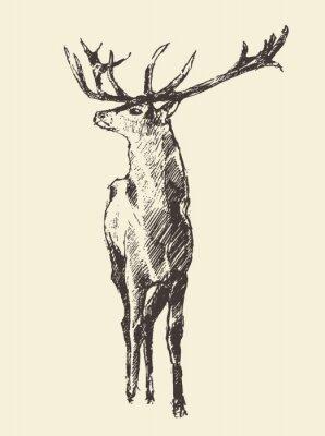 Fotomural Deer Grabado, Ilustración Vintage, Vector