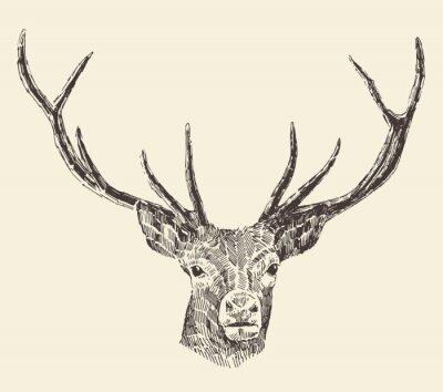 Fotomural Deer Head ejemplo del vintage, dibujado a mano, vector