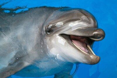 Fotomural Delfín mirando hacia arriba