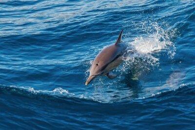 Fotomural Delfín saltando del agua
