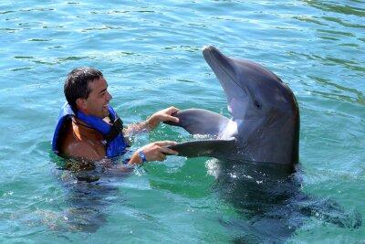 Fotomural delfines nadar con usted