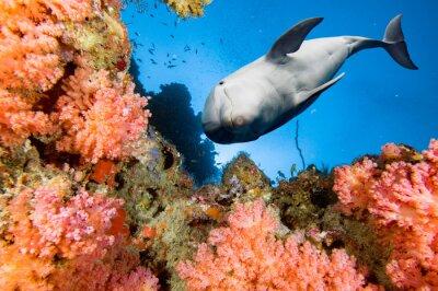 Fotomural Delfines subacuáticos en fondo azul del océano