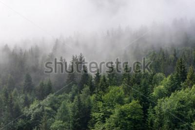 Fotomural Descripción general del bosque de hoja perenne - copas de árboles verdes altos con niebla densa rodando en un exuberante desierto