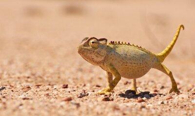 Fotomural Desierto del Camaleón en el Namib, Namibia