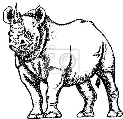 Dibujo Blanco Y Negro De Un Bosquejo Del Rinoceronte Fotomural