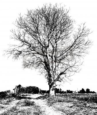 Dibujo En Blanco Y Negro De Un árbol Seco Sin Hojas Que Es