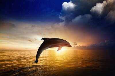 Fotomural Dolphin jumping