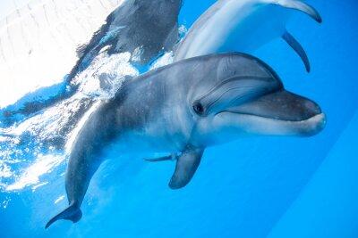 Fotomural Dolphin nada bajo el agua