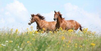 Fotomural Dos caballos castaños corriendo juntos