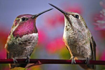 Fotomural Dos colibríes de pie al lado de la otra en una ramita con flores en el fondo.