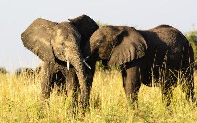 Fotomural Dos elefantes afectuosos